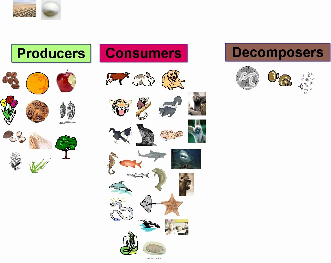 Producer Consumer Decomposer Worksheet Inspirational What are De Posers Brainly