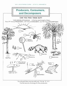 Producer Consumer Decomposer Worksheet Lovely Food Webs Food and Yahoo Search On Pinterest