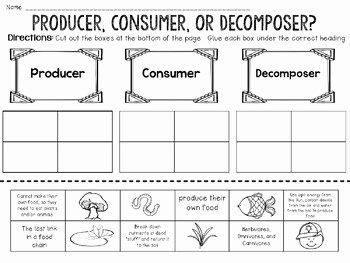 Producer Consumer Decomposer Worksheet Lovely Producer Consumer De Poser Activity Bundle by Jh Lesson