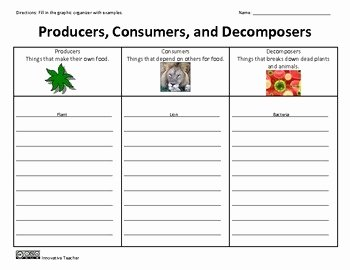 Producer Consumer Decomposer Worksheet New Producers Consumers De Posers Graphic organizer
