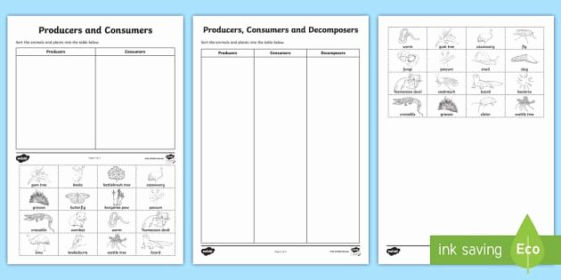 Producers and Consumers Worksheet Best Of Producers Consumers and De Posers sorting Worksheet