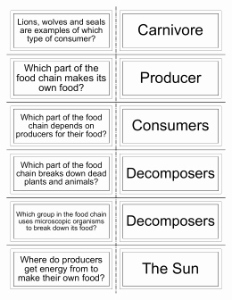 Producers and Consumers Worksheet Best Of the Food Chain