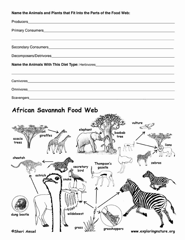Producers and Consumers Worksheet Lovely African Savannah Food Web Activity