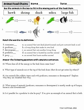 Producers and Consumers Worksheet Lovely Animal Food Chains Activity Sheet by Carrie Whitlock