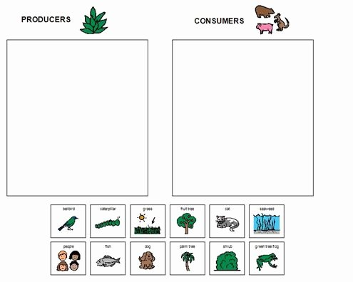 Producers and Consumers Worksheet Luxury Boardmaker Achieve Producers and Consumers sort