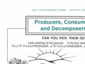 Producers and Consumers Worksheet New Producers and Consumers and De Posers Worksheet for 1st