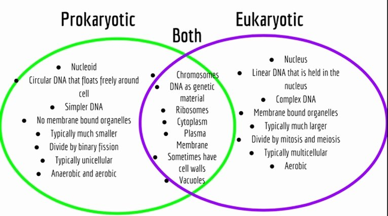 Prokaryote Vs Eukaryote Worksheet Awesome Cell and Cell Membrane Biomodderfied