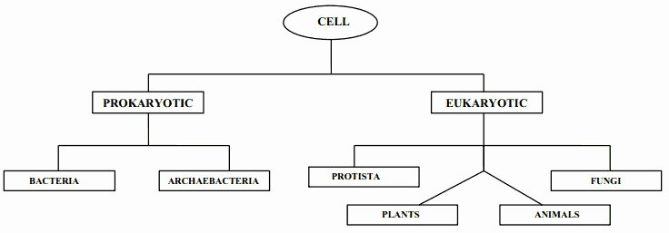 Prokaryote Vs Eukaryote Worksheet Awesome Prokaryotic and Eukaryotic Cells Worksheet