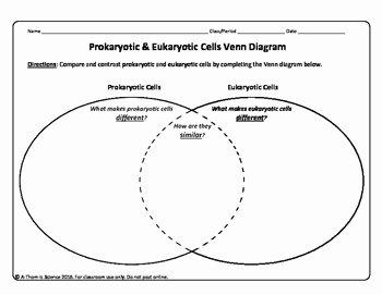 Prokaryote Vs Eukaryote Worksheet Awesome Prokaryotic Cell Versus Eukaryotic Cell Venn Diagram by A