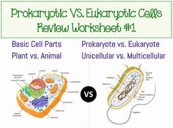 Prokaryote Vs Eukaryote Worksheet Elegant Prokaryotic & Eukaryotic Cell Worksheet by Amy Walker