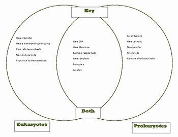 Prokaryote Vs Eukaryote Worksheet Inspirational Prokaryote Vs Eukaryote Worksheet Answer Key Breadandhearth