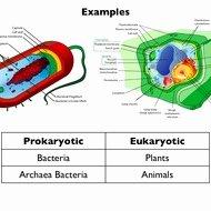 Prokaryote Vs Eukaryote Worksheet Unique Eukaryotic Vs Prokaryotic Cells Tutorial
