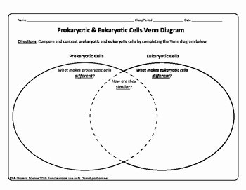 Prokaryotes and Eukaryotes Worksheet Awesome Prokaryotic Cell Versus Eukaryotic Cell Venn Diagram by A