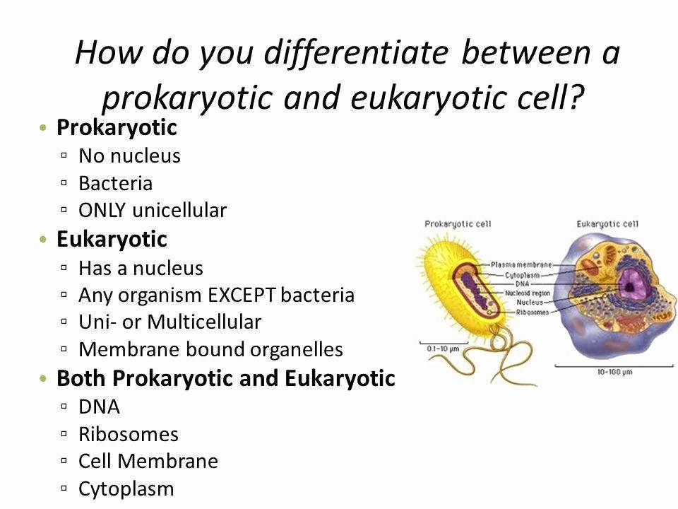 Prokaryotes and Eukaryotes Worksheet Best Of Prokaryotic and Eukaryotic Cells Worksheet
