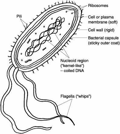 Prokaryotes Bacteria Worksheet Answers Elegant Study Help Biology and Study On Pinterest