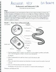 "Prokaryotes Bacteria Worksheet Answers Lovely Cell Packet 1 Answers 5fl"" 6 Cwwuflfid Anemia Key"