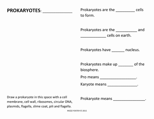 Prokaryotes Bacteria Worksheet Answers Lovely Prokaryote Bacteria Worksheets and Answer Key by