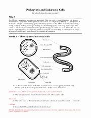 Prokaryotes Vs Eukaryotes Worksheet Best Of Prokaryotic Vs Eukaryotic Worksheet andrea Ringman