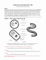 Prokaryotes Vs Eukaryotes Worksheet Unique Prokaryotic Vs Eukaryotic Worksheet andrea Ringman