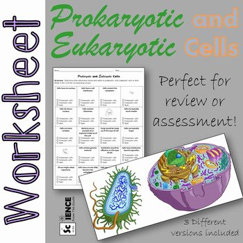 Prokaryotic and Eukaryotic Cells Worksheet Best Of Prokaryotic and Eukaryotic Cells Worksheet for Review or
