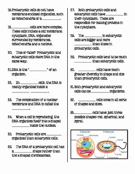 Prokaryotic and Eukaryotic Cells Worksheet Elegant Prokaryotic and Eukaryotic Cells Student Fill In the