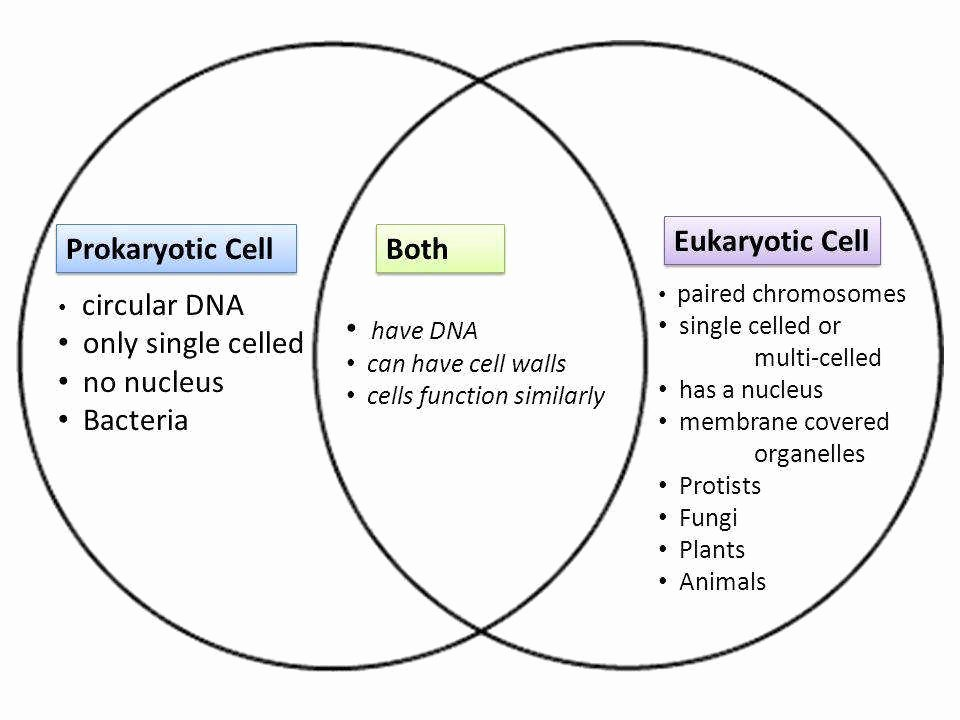 Prokaryotic and Eukaryotic Cells Worksheet Inspirational Prokaryotic and Eukaryotic Cells Worksheet
