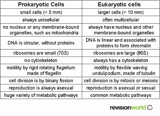 Prokaryotic and Eukaryotic Cells Worksheet Luxury Cells