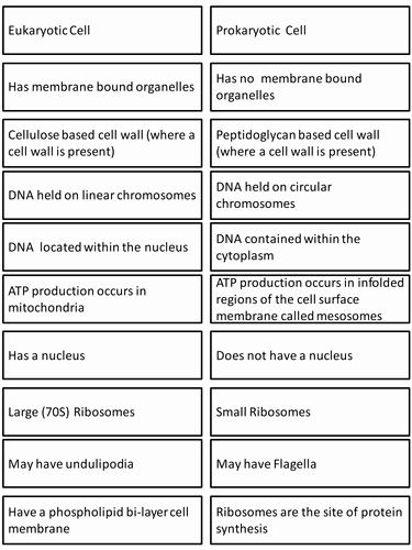 Prokaryotic and Eukaryotic Cells Worksheet New Prokaryote & Eukaryote Card sort by Elevateeducation