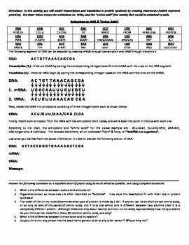 Protein Synthesis Practice Worksheet Elegant Decoding Protein Synthesis & Decoding Mutations Activities