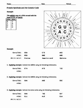 Protein Synthesis Practice Worksheet New Protein Synthesis and the Genetic Code Practice by Science