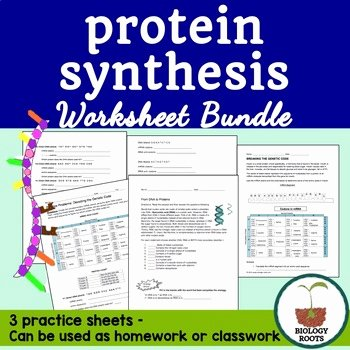 Protein Synthesis Practice Worksheet Unique Protein Synthesis Worksheet Bundle by Biology Roots
