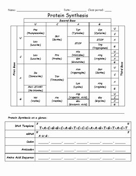 Protein Synthesis Review Worksheet Answers Fresh Protein Synthesis Worksheet by Activelearning