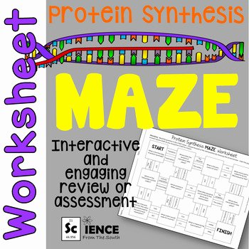 Protein Synthesis Review Worksheet Answers Luxury Protein Synthesis Maze Worksheet for Review or assessment