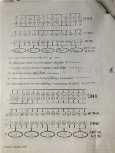 Protein Synthesis Review Worksheet Answers Unique 24 Beautiful Dna Review Worksheet