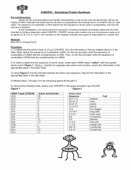 Protein Synthesis Review Worksheet Answers Unique Simulating Protein Synthesis Worksheet