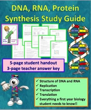 Protein Synthesis Review Worksheet Awesome Dna Rna Protein Synthesis Worksheet Study Guide