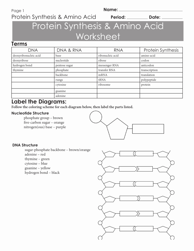 Protein Synthesis Review Worksheet Luxury Codon Worksheet Answer Key