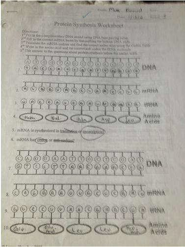 Protein Synthesis Worksheet Answer Key Awesome Protein Synthesis Worksheet