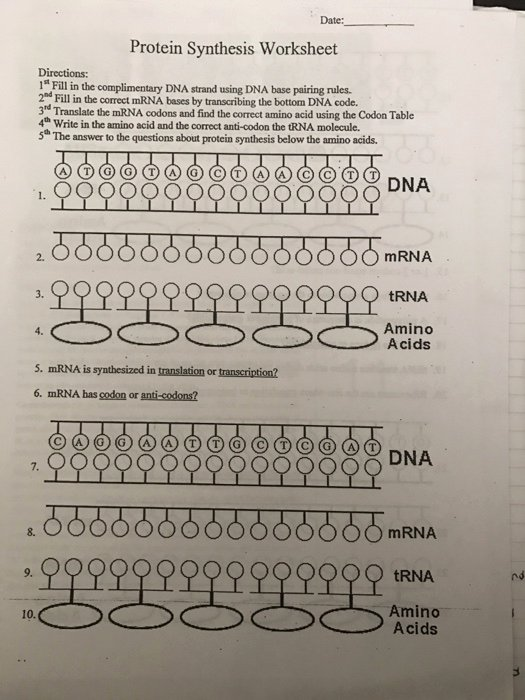 "Protein Synthesis Worksheet Answer Key Awesome solved Date Protein Synthesis Worksheet Directions 1"" F"