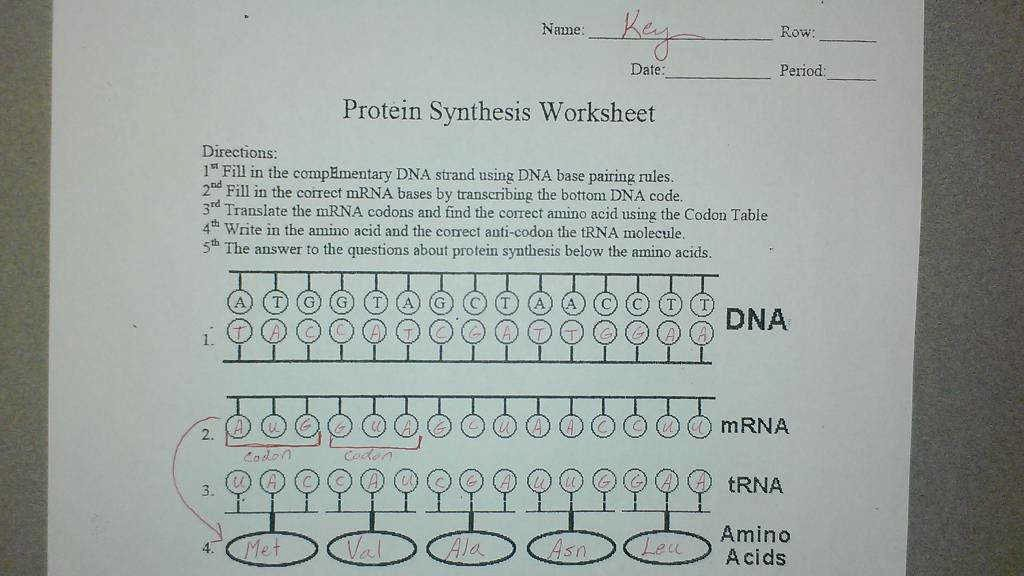 Protein Synthesis Worksheet Answer Key Best Of Protein Synthesis Worksheet