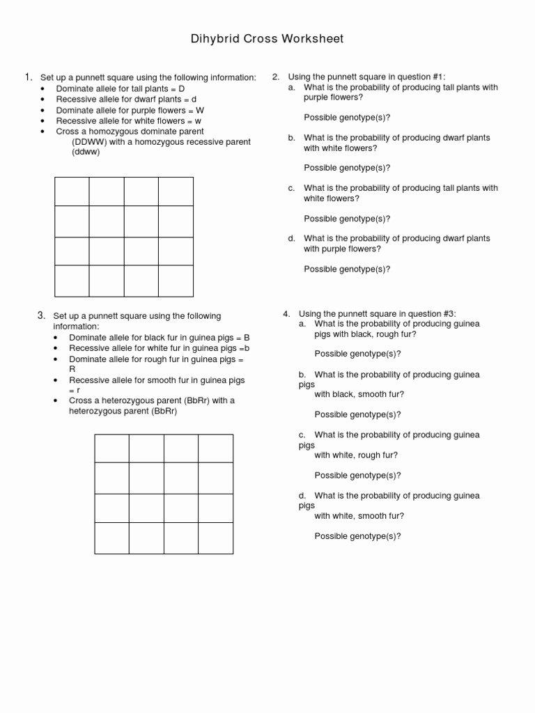 Punnett Square Practice Problems Worksheet Fresh Dihybrid Cross Practice Zygosity