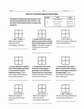 Punnett Square Practice Problems Worksheet Fresh Punnett Square Generator Wo by Haney Science