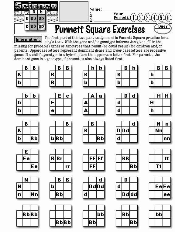 Punnett Square Practice Problems Worksheet Fresh Worksheets About Punnett Squares