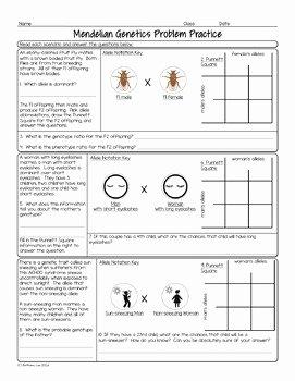 Punnett Square Practice Problems Worksheet Inspirational Punnett Square Practice Problems Biology Homework