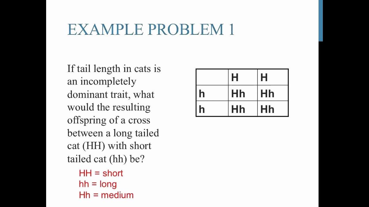 Punnett Square Practice Problems Worksheet Inspirational Punnett Square Practice Problems In Plete Dominance