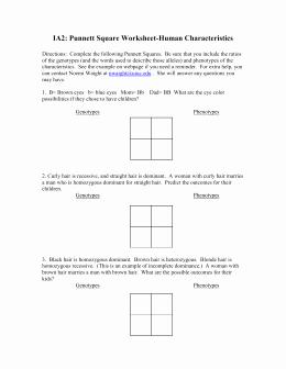 Punnett Square Practice Problems Worksheet Lovely Punnett Square Worksheet 1