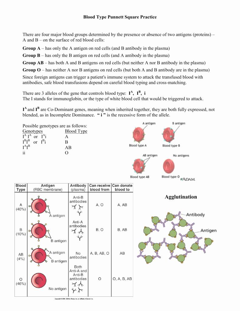 Punnett Square Practice Problems Worksheet Luxury Blood Type Punnett Square Practice