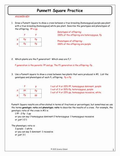 Punnett Square Practice Problems Worksheet New Punnett Square Practice Worksheet with Answers