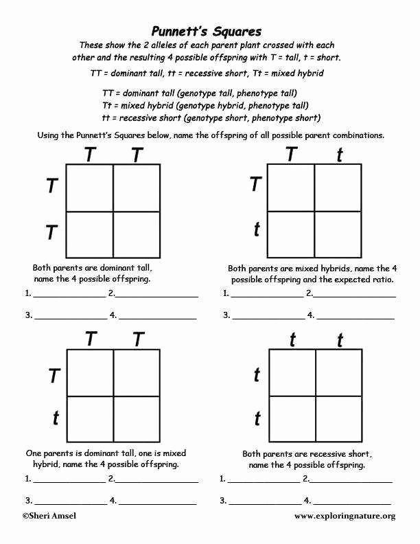 Punnett Square Practice Problems Worksheet New Punnett Square Worksheet Answers