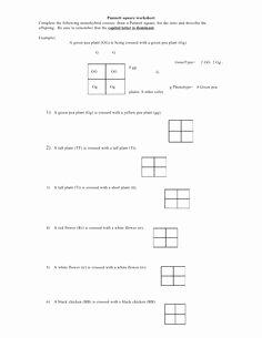 Punnett Square Practice Problems Worksheet Unique Genetics Practice Problems Pedigree Tables
